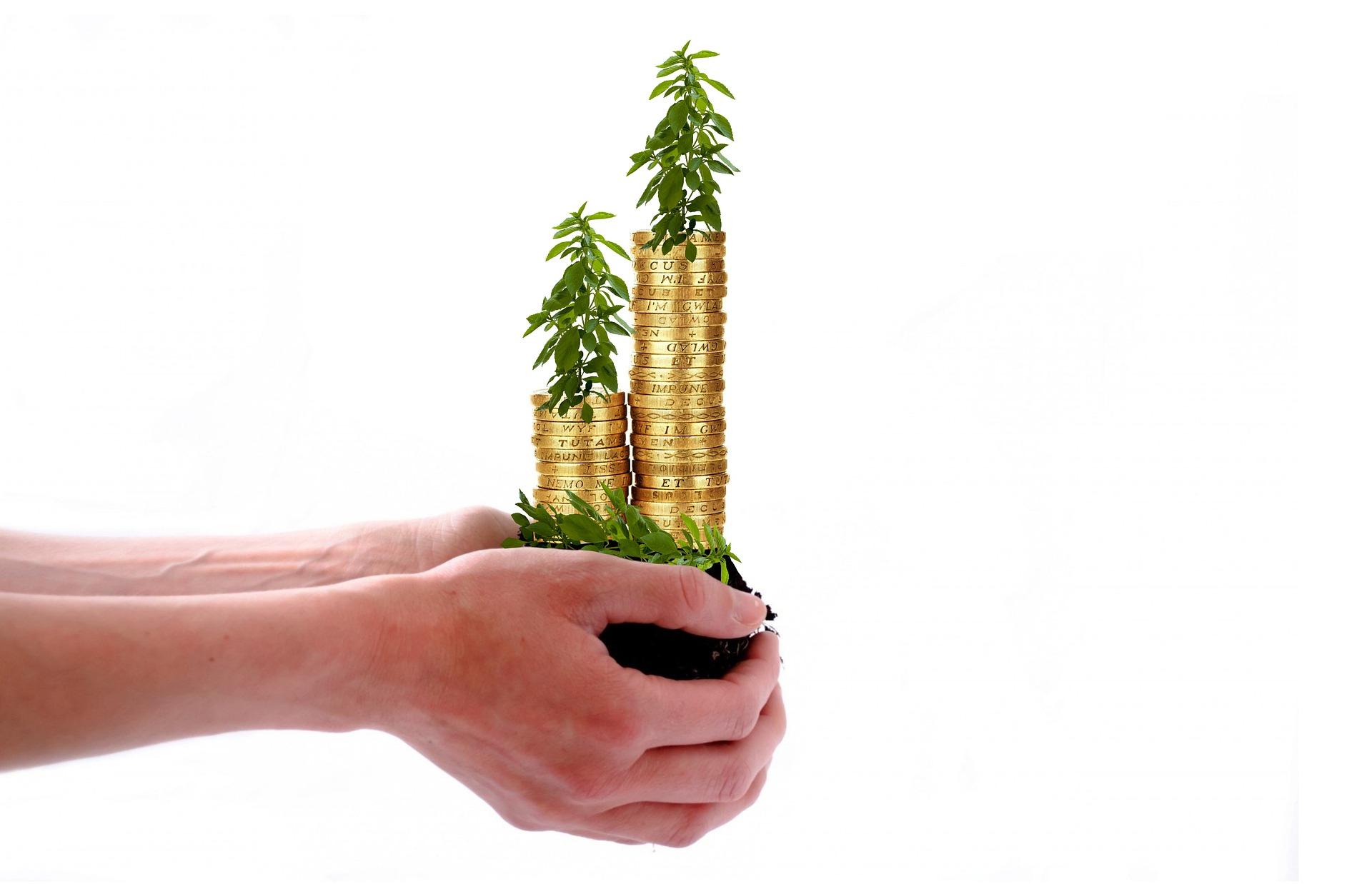 Unas manos sujetan una planta a la que le crece dinero