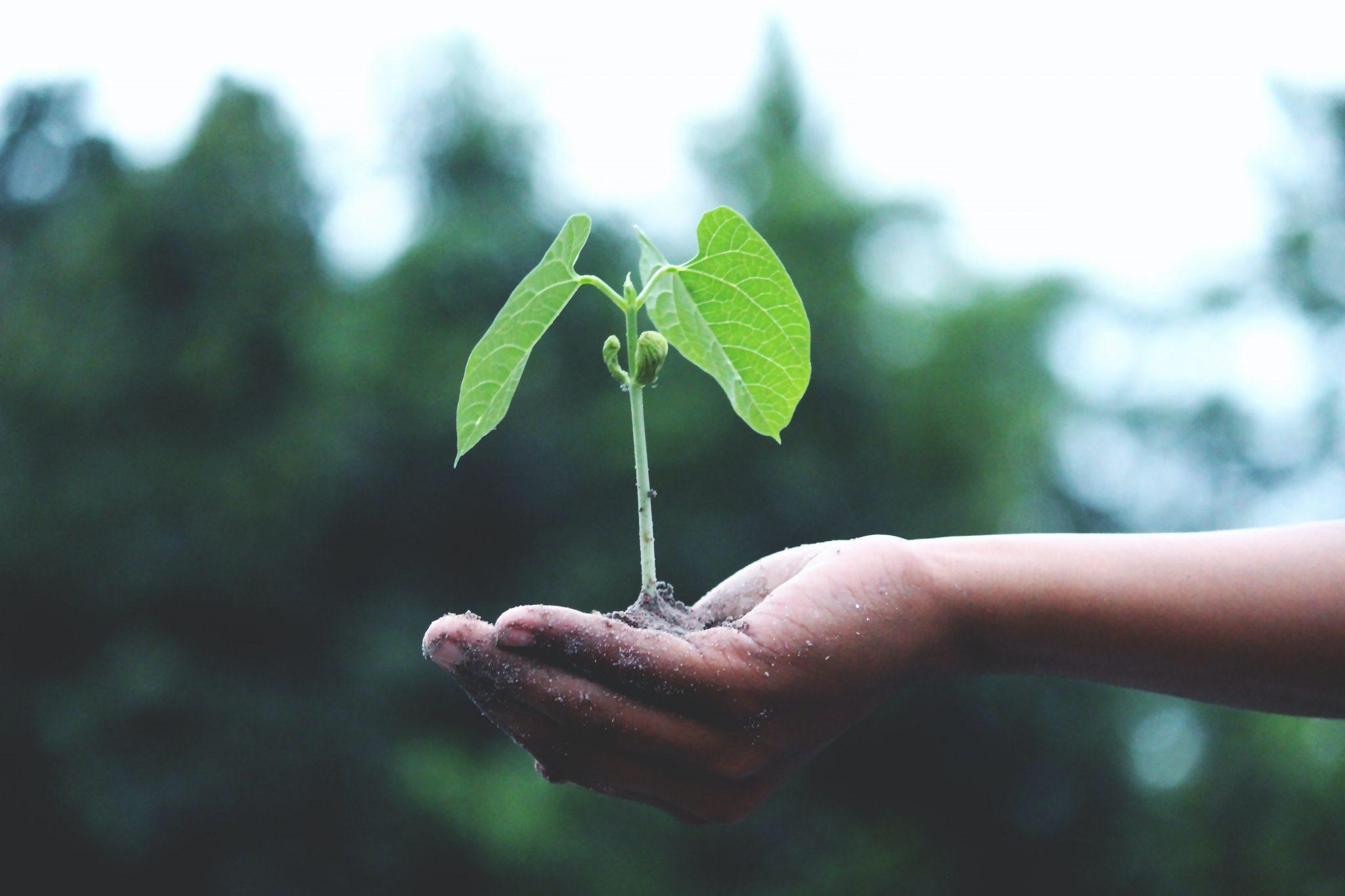 Una mano sostiene una planta. Foto: Akil Mazumder/Pexels