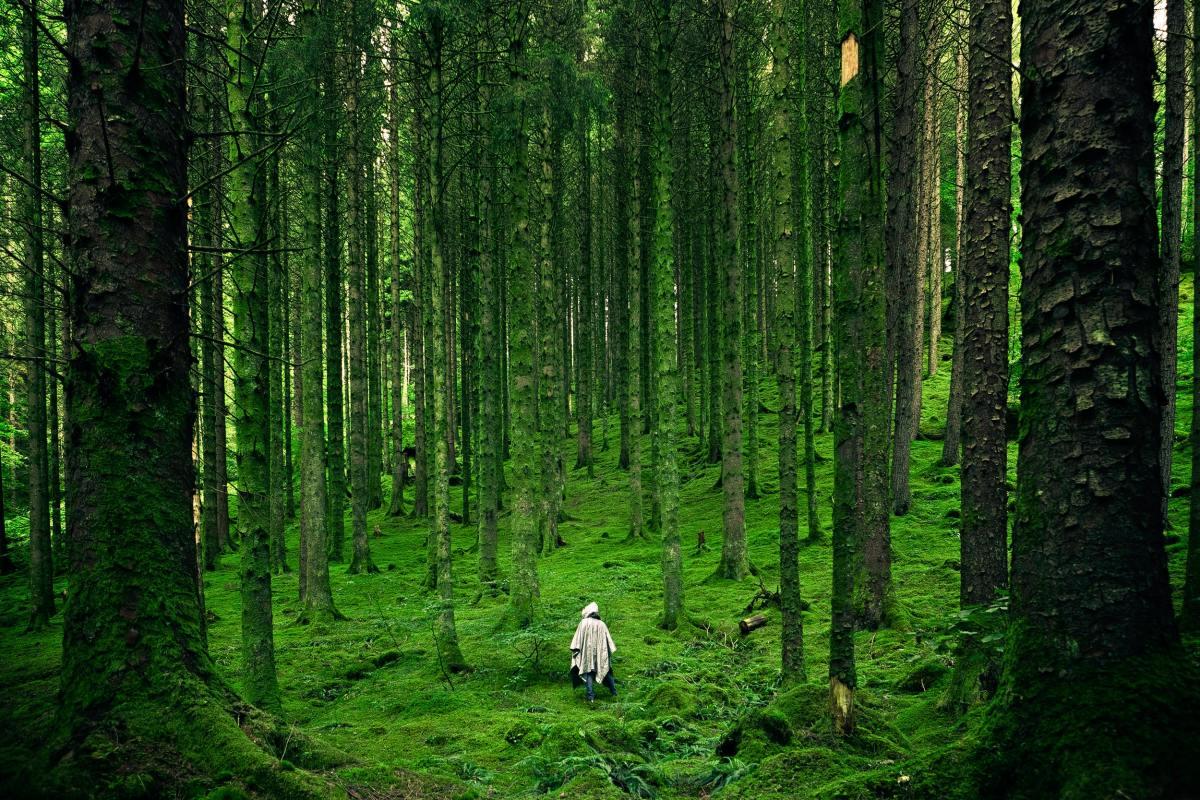 Bosque. Naturaleza. Foto: Luis del Río (Pexels)